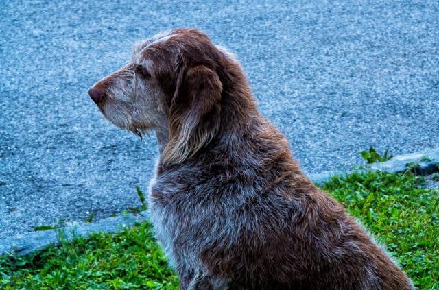dog-3