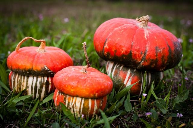 pumpkinfam_lr