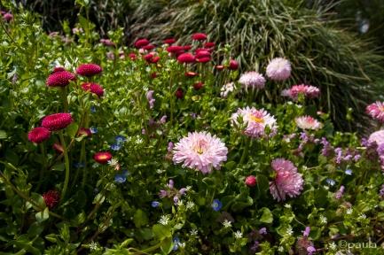 cvjece_botanicki