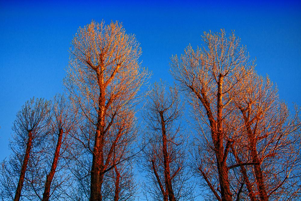 trees_jarun-1