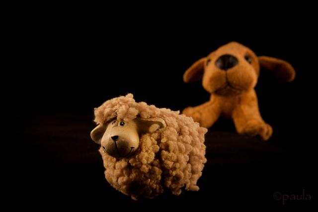 pas i ovca_boja