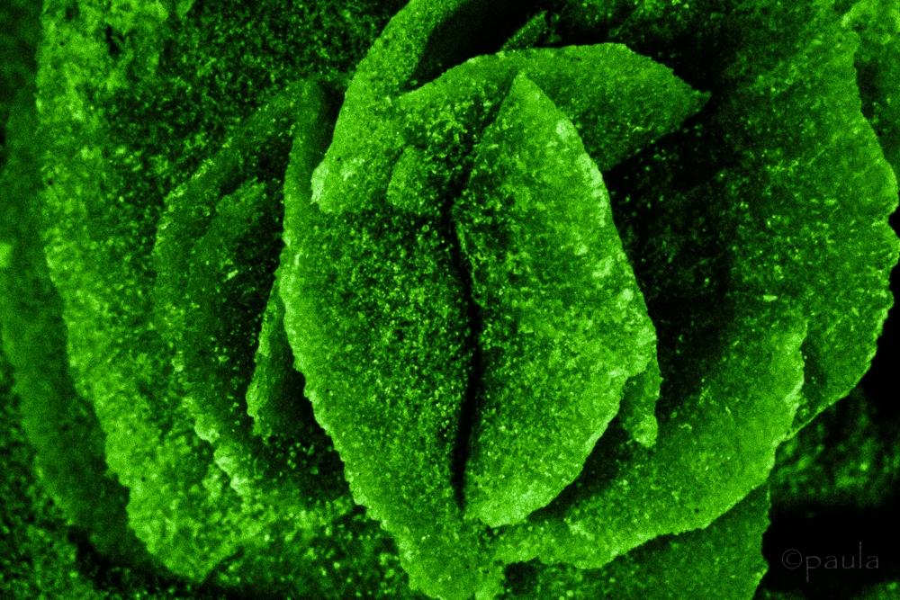 des_rose_green