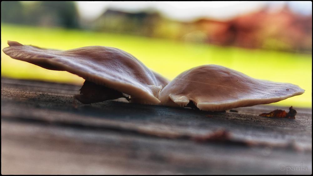 gljiva na stolu