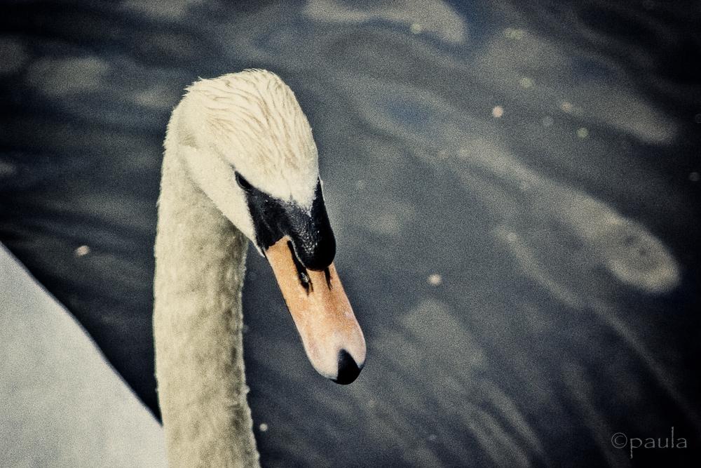 bleak beak