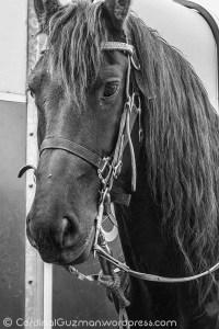horse_9764