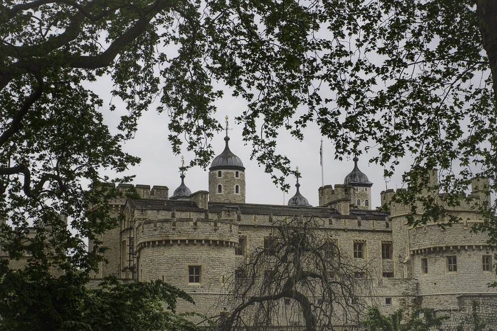 tower of london_trees_dif-fog