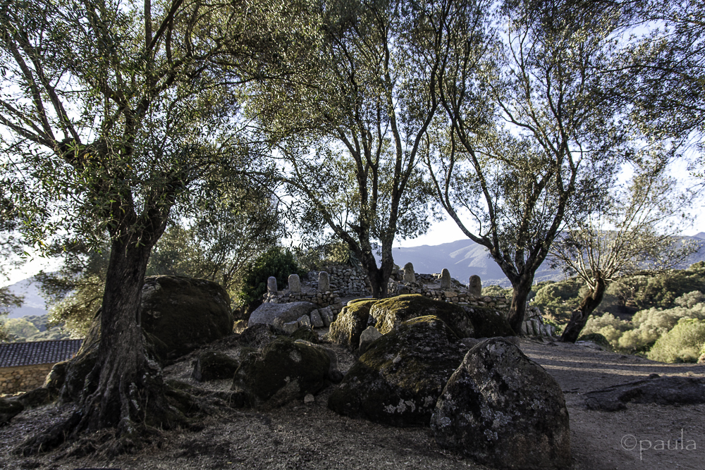 Menhirs in olive grove, Filitosa