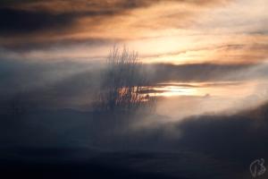 march sun_double ex_viv_cef-1_scale