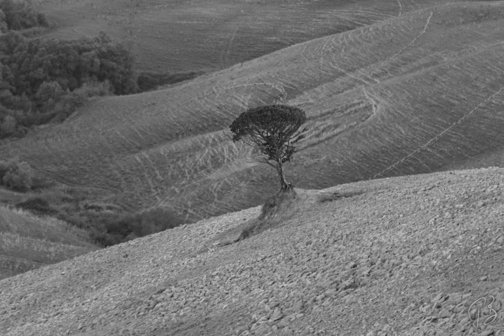 drvo volterra b&W drugi-1_potpis_scale