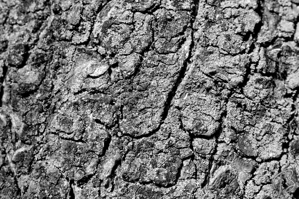 texture_bark_b_w-1_potpis scaled
