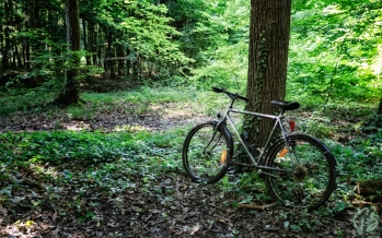 bicikl u boji_crop-1_potpis