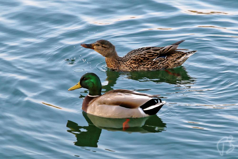 patke kapljice-1_potpis_scale