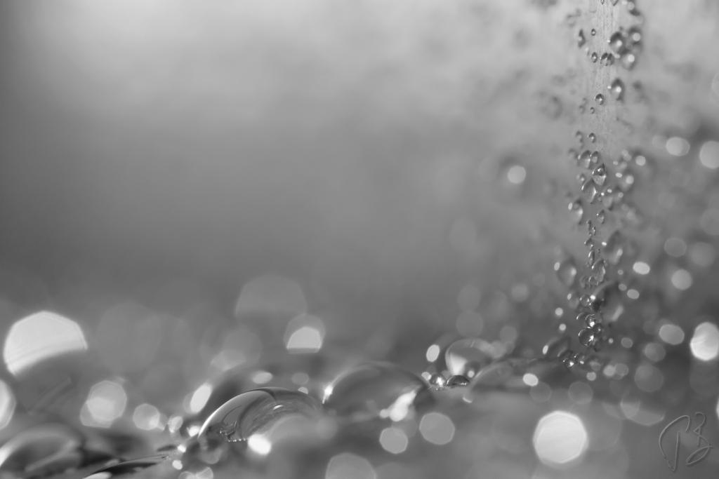condensation_bw_drukcija-1_potpis_resize