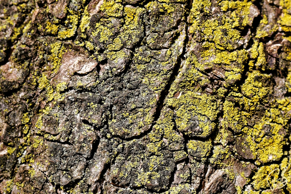 texture-bark-1crop_potpis_scale