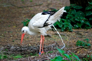 three-legged-stork-1_potpis_scale