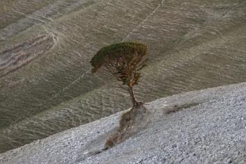tree-toscana-1_potpis_scale